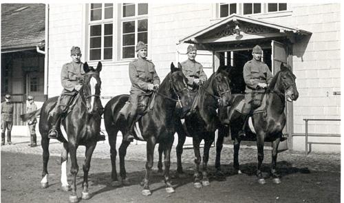 pferde-2
